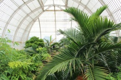 Coucou de Kew