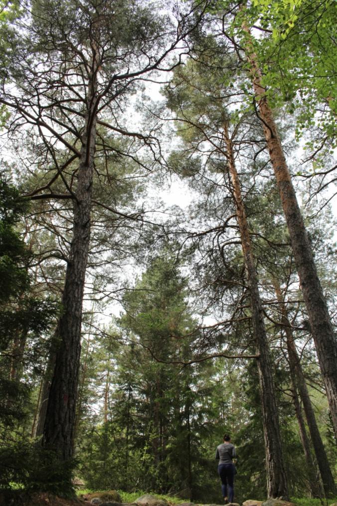 Grinda forêt