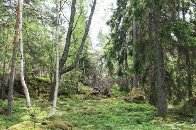 Grinda forêt2