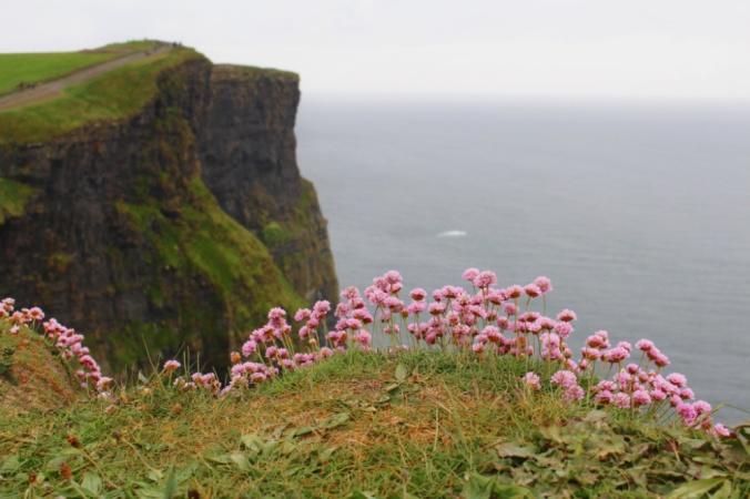 fleurs falaises de Moher Irlande