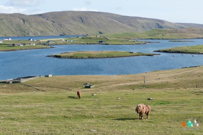 shetland-ecosse-oohmyworld