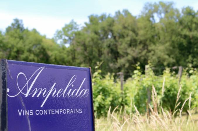 Ampelidae