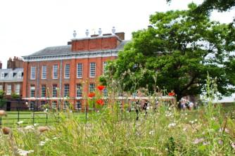 Kensington palace wildflower garden