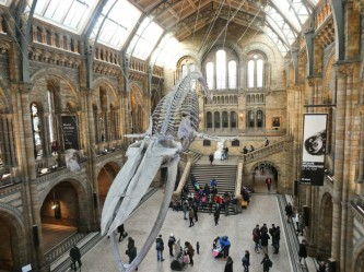 Hope whale Natural history museum Londres